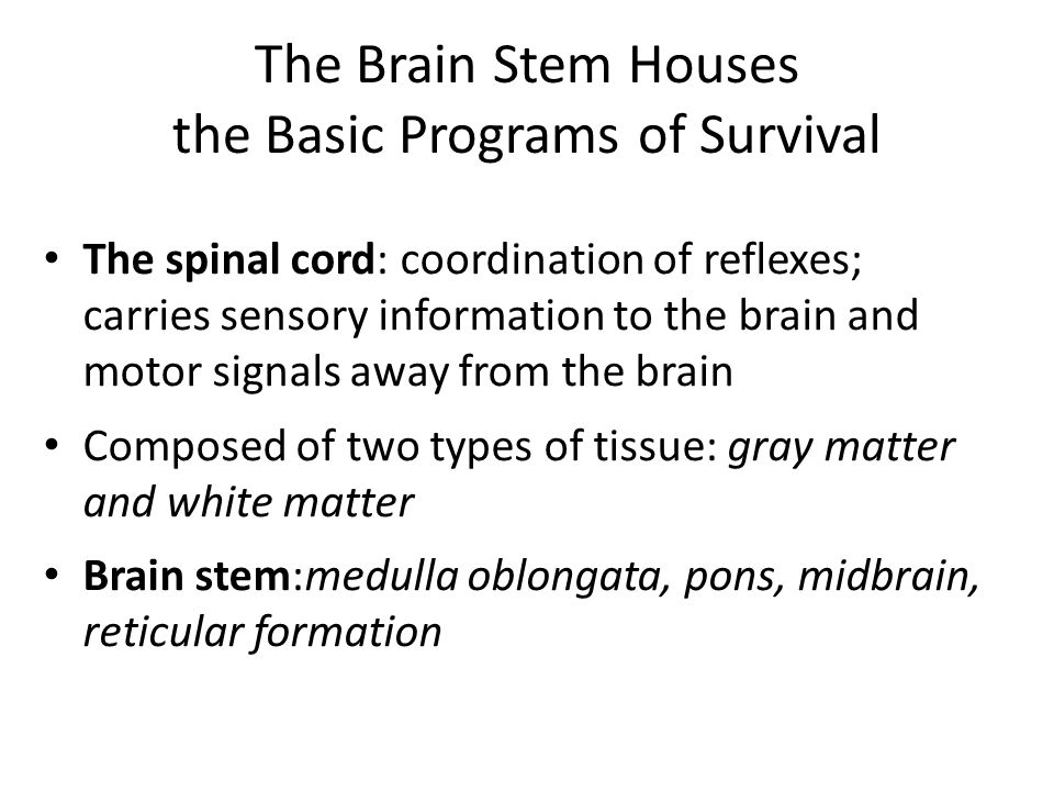 The Brain Stem Houses the Basic Programs of Survival The spinal cord: coordination of reflexes; carries sensory information to the brain and motor signals away from the brain Composed of two types of tissue: gray matter and white matter Brain stem:medulla oblongata, pons, midbrain, reticular formation