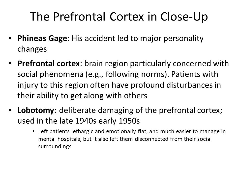 The Prefrontal Cortex in Close-Up Phineas Gage: His accident led to major personality changes Prefrontal cortex: brain region particularly concerned with social phenomena (e.g., following norms).