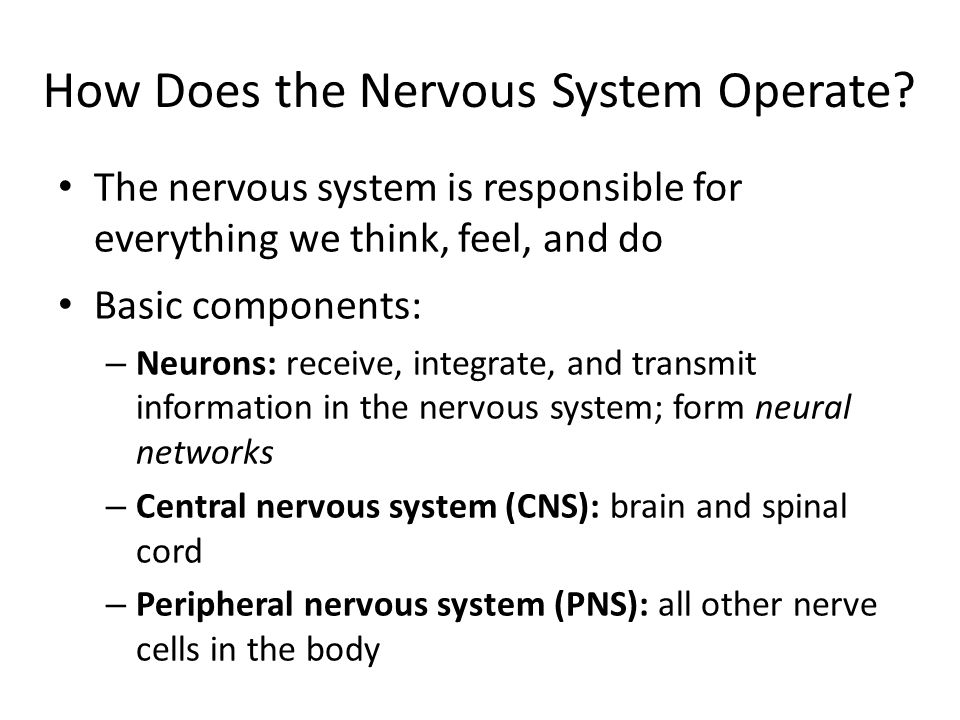 Neurons Are Specialized for Communication Nerve cells are powered by electrical impulses; communicate with other nerve cells through chemical signals Three basic phases: – Reception: Chemical signals are received from neighboring neurons – Integration: Incoming signals are assessed – Transmission: Signals are passed on to other receiving neurons