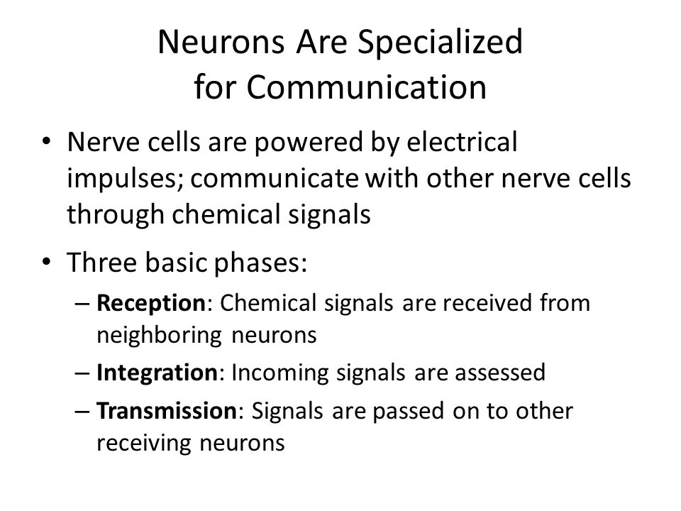 Action Potentials Cause Neural Communication Action potential (neural firing): the electrical signal that passes along the axon and causes the release of chemicals that transmit signals to other neurons