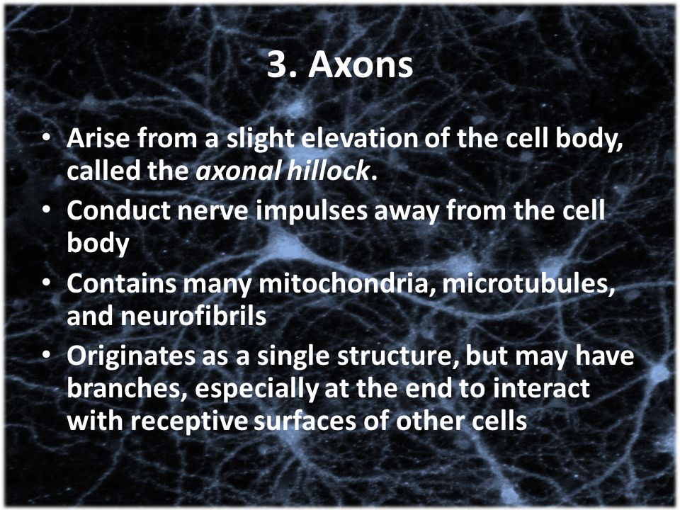 3. Axons Arise from a slight elevation of the cell body, called the axonal hillock. Conduct nerve impulses away from the cell body Contains many mitoc