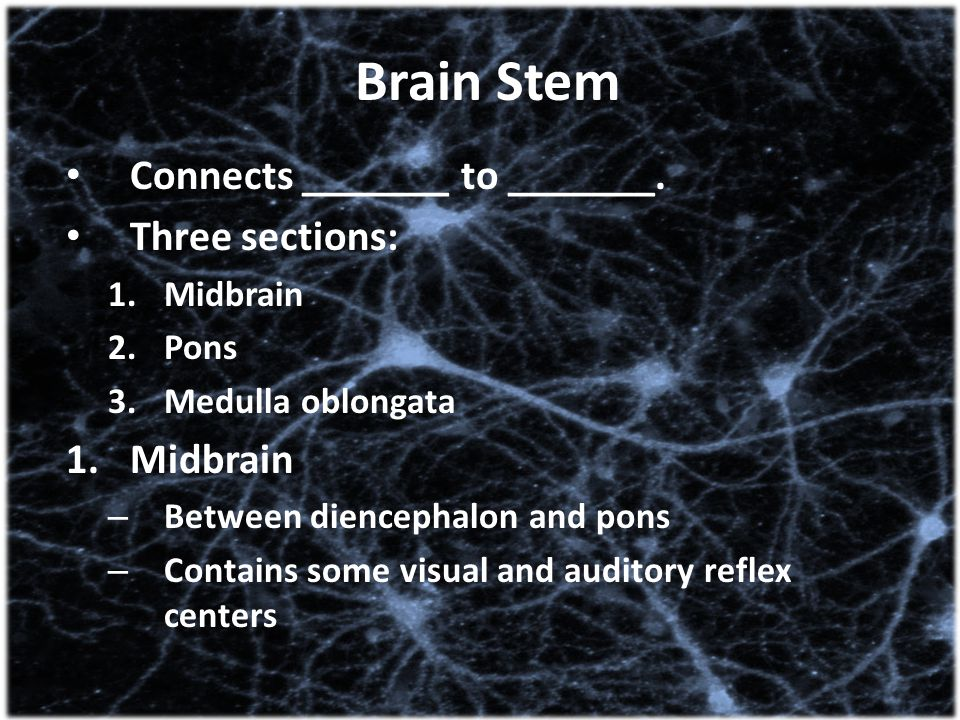 Brain Stem Connects _______ to _______. Three sections: 1.Midbrain 2.Pons 3.Medulla oblongata 1.Midbrain – Between diencephalon and pons – Contains so