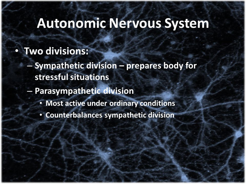 Autonomic Nervous System Two divisions: – Sympathetic division – prepares body for stressful situations – Parasympathetic division Most active under o