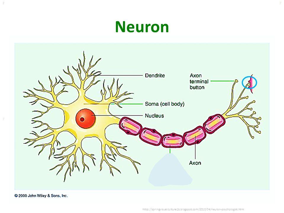 Kuls oo m Neuron http://springvisualculture1b.blogspot.com/2010/04/neuron-psychologist.html