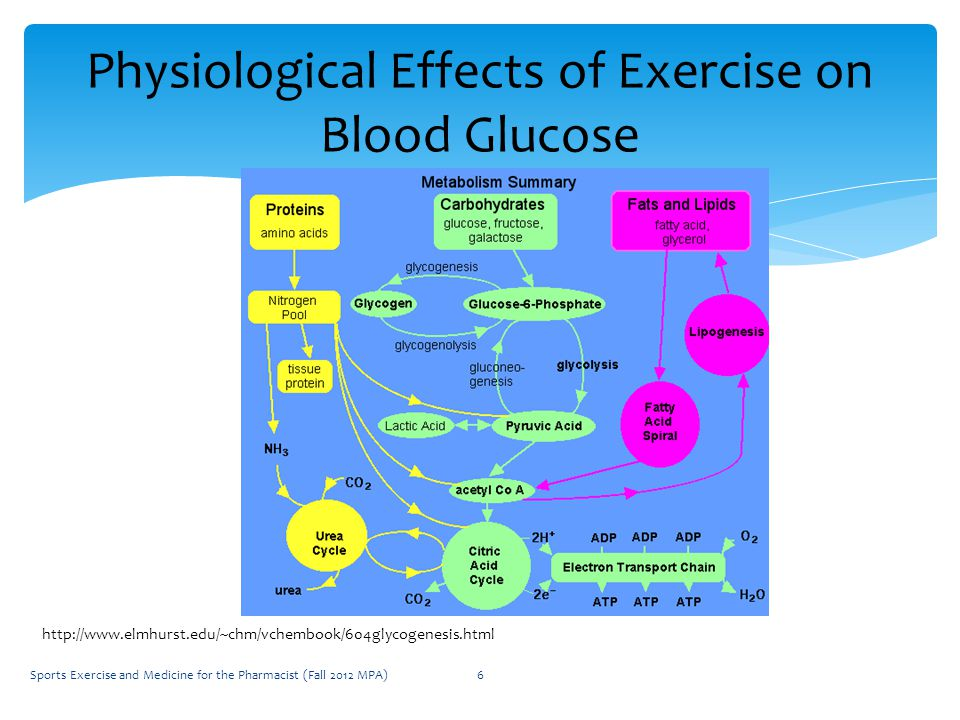 Sports Exercise and Medicine for the Pharmacist (Fall 2012 MPA)6 Physiological Effects of Exercise on Blood Glucose http://www.elmhurst.edu/~chm/vchembook/604glycogenesis.html