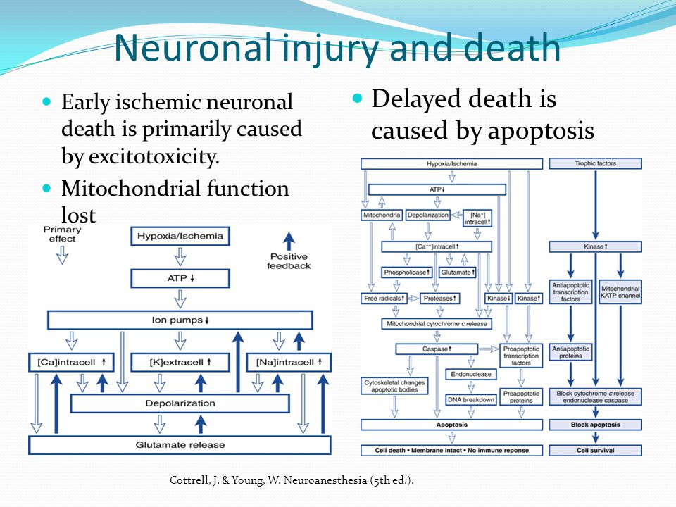 Brain Ischemia Global ischemia, cessation of blood flow for greater than 8 minutes.