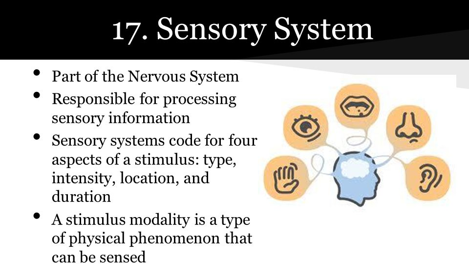 17. Sensory System Part of the Nervous System Responsible for processing sensory information Sensory systems code for four aspects of a stimulus: type