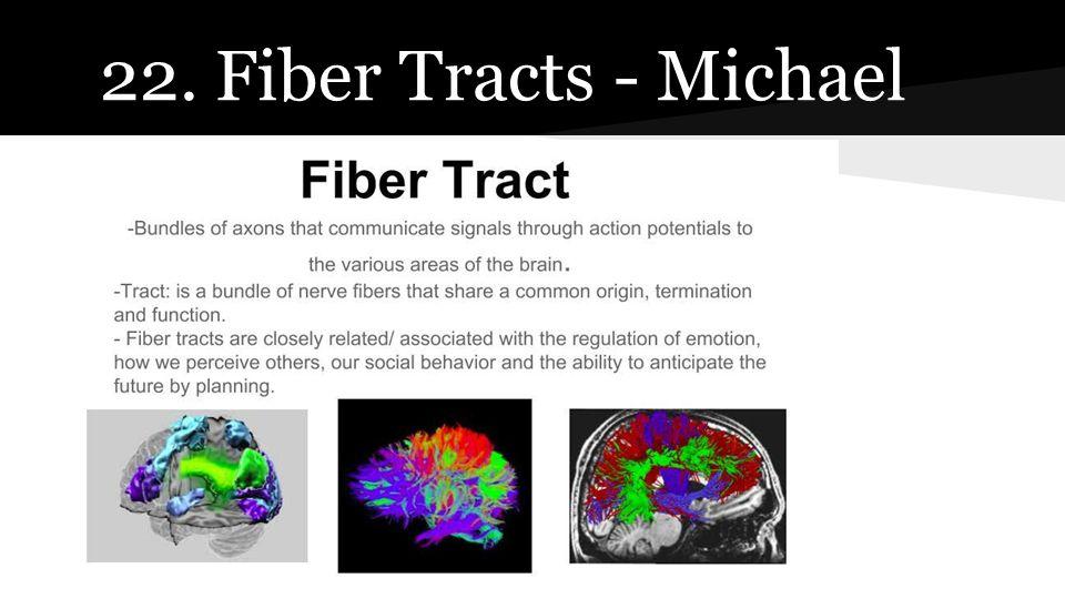 22. Fiber Tracts - Michael