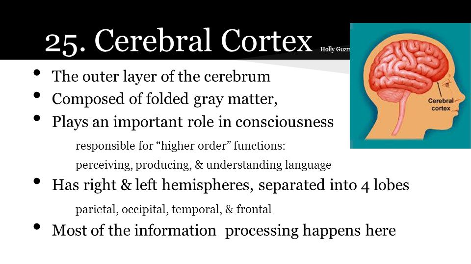 """The outer layer of the cerebrum Composed of folded gray matter, Plays an important role in consciousness responsible for """"higher order"""" functions: per"""