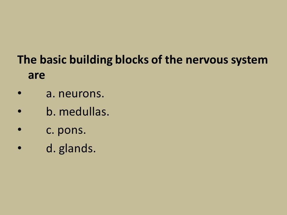 The basic building blocks of the nervous system are a. neurons. b. medullas. c. pons. d. glands.