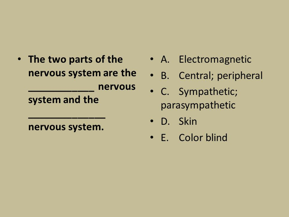 The two parts of the nervous system are the ____________ nervous system and the ______________ nervous system. A.Electromagnetic B.Central; peripheral