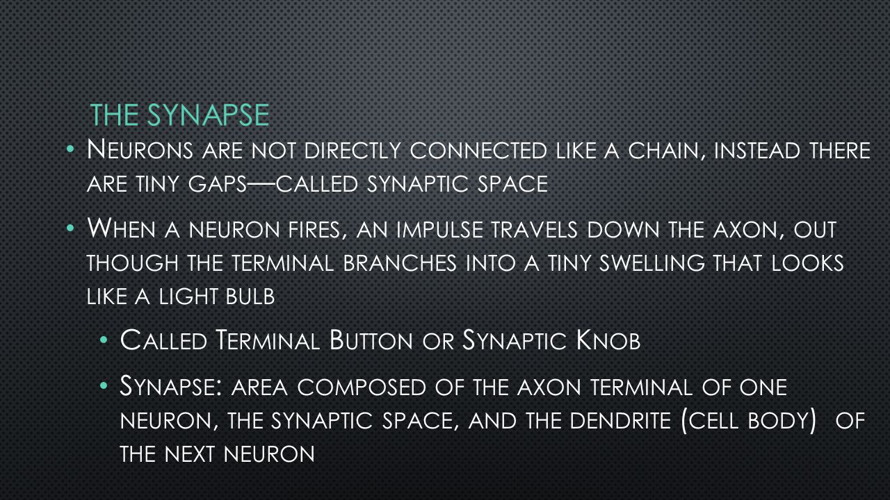 N EURONS ARE NOT DIRECTLY CONNECTED LIKE A CHAIN, INSTEAD THERE ARE TINY GAPS — CALLED SYNAPTIC SPACE W HEN A NEURON FIRES, AN IMPULSE TRAVELS DOWN THE AXON, OUT THOUGH THE TERMINAL BRANCHES INTO A TINY SWELLING THAT LOOKS LIKE A LIGHT BULB C ALLED T ERMINAL B UTTON OR S YNAPTIC K NOB S YNAPSE : AREA COMPOSED OF THE AXON TERMINAL OF ONE NEURON, THE SYNAPTIC SPACE, AND THE DENDRITE ( CELL BODY ) OF THE NEXT NEURON
