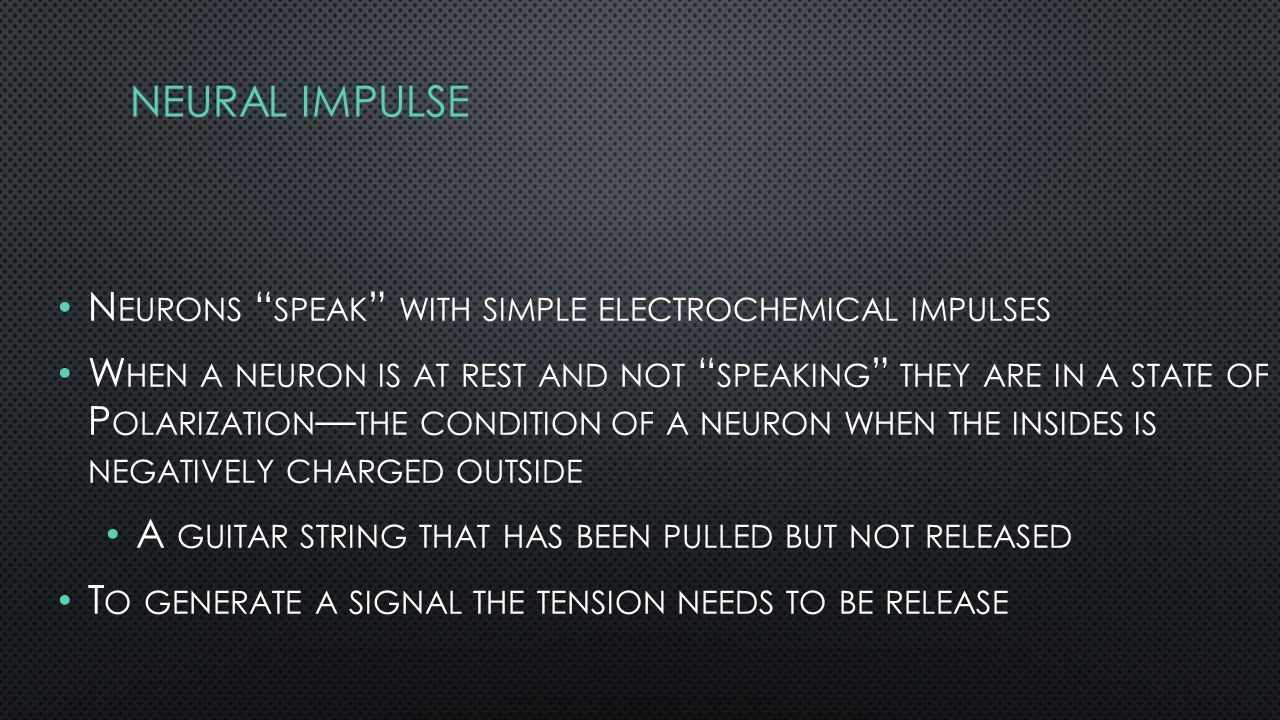 N EURONS SPEAK WITH SIMPLE ELECTROCHEMICAL IMPULSES W HEN A NEURON IS AT REST AND NOT SPEAKING THEY ARE IN A STATE OF P OLARIZATION — THE CONDITION OF A NEURON WHEN THE INSIDES IS NEGATIVELY CHARGED OUTSIDE A GUITAR STRING THAT HAS BEEN PULLED BUT NOT RELEASED T O GENERATE A SIGNAL THE TENSION NEEDS TO BE RELEASE