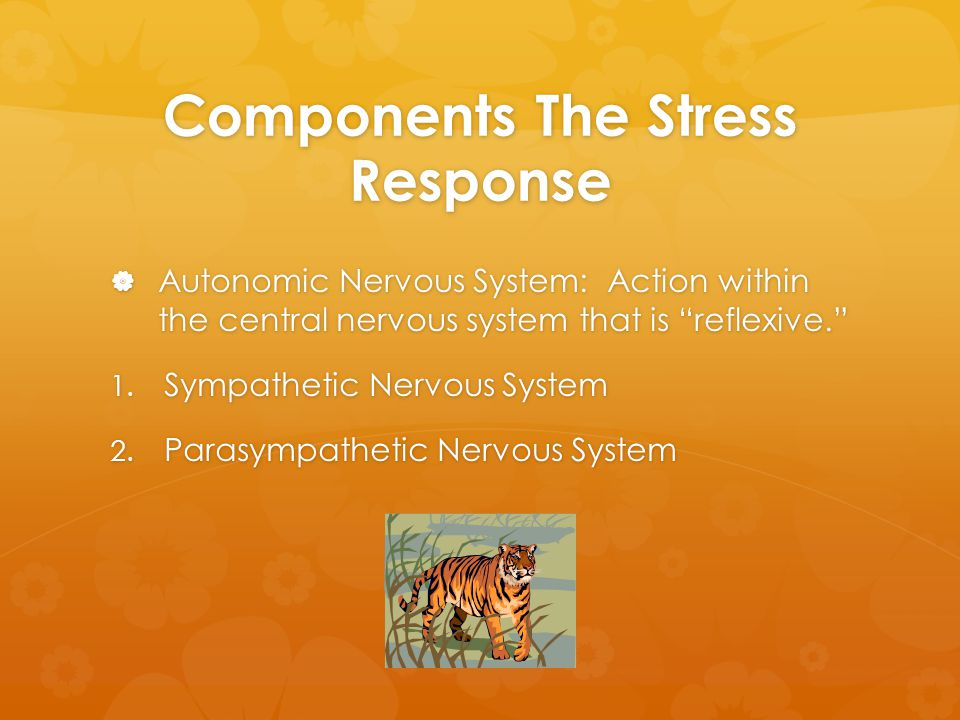 Components The Stress Response  Autonomic Nervous System: Action within the central nervous system that is reflexive. 1.