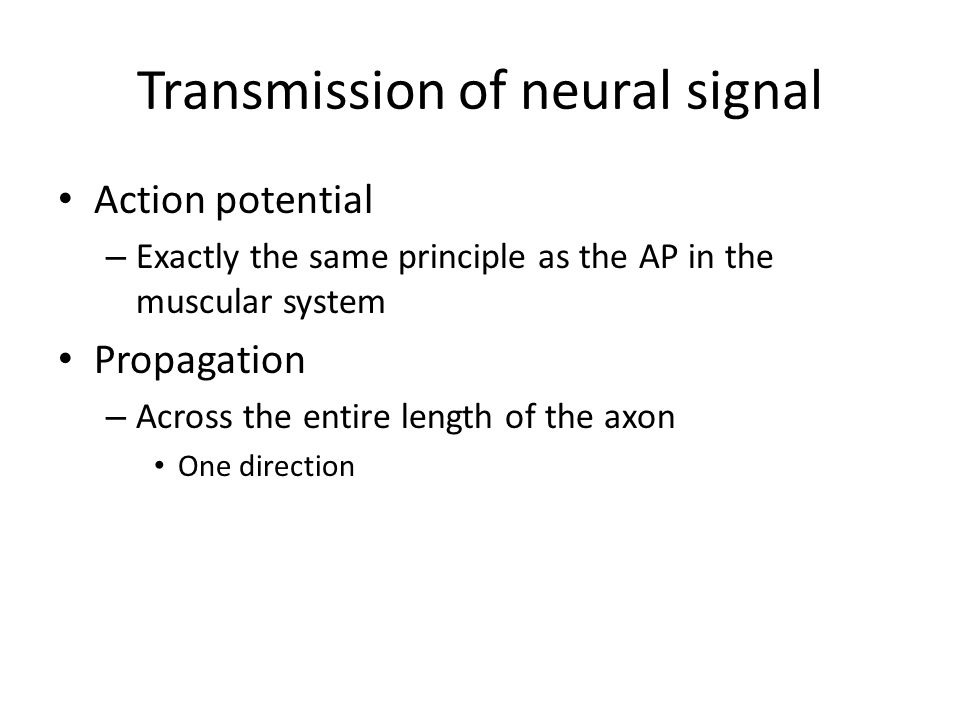 Transmission of neural signal Action potential – Exactly the same principle as the AP in the muscular system Propagation – Across the entire length of the axon One direction