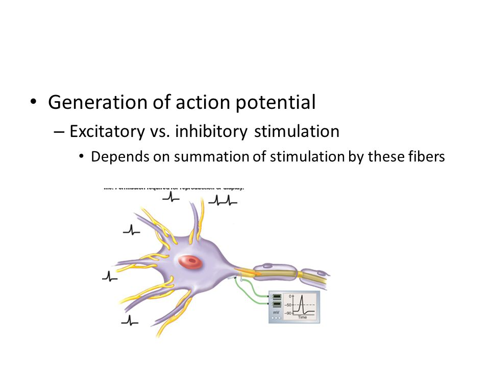 Generation of action potential – Excitatory vs.