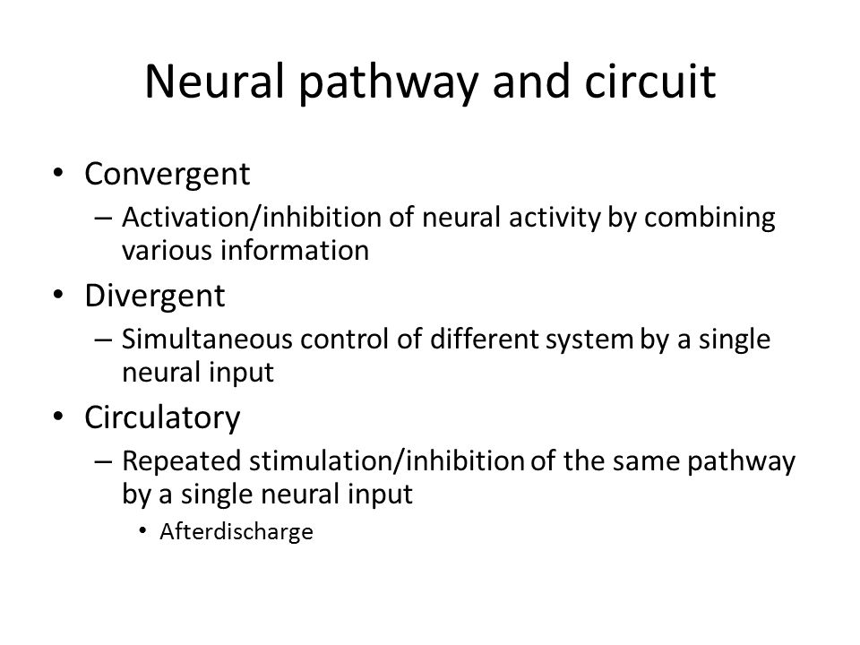 Neural pathway and circuit Convergent – Activation/inhibition of neural activity by combining various information Divergent – Simultaneous control of different system by a single neural input Circulatory – Repeated stimulation/inhibition of the same pathway by a single neural input Afterdischarge
