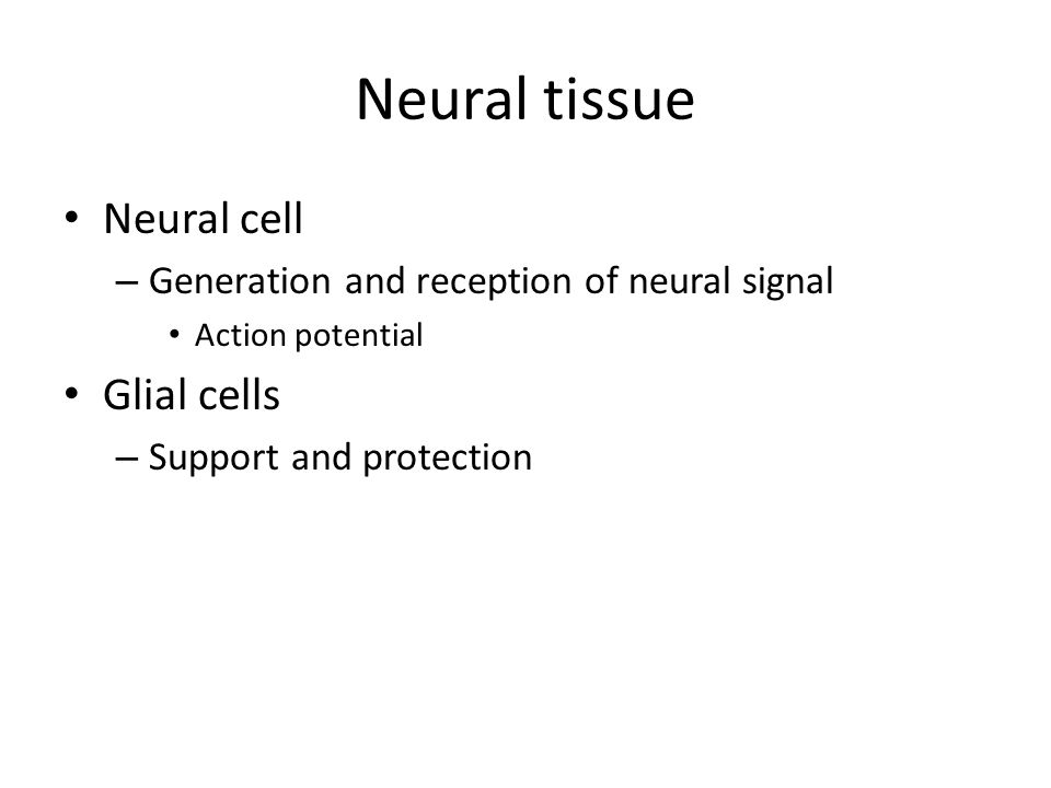 Neural tissue Neural cell – Generation and reception of neural signal Action potential Glial cells – Support and protection