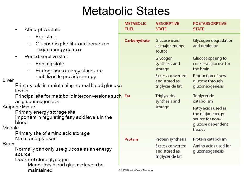 Metabolic States Absorptive state –Fed state –Glucose is plentiful and serves as major energy source Postabsorptive state –Fasting state –Endogenous e