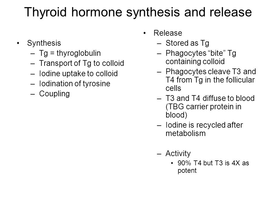 Thyroid hormone synthesis and release Synthesis –Tg = thyroglobulin –Transport of Tg to colloid –Iodine uptake to colloid –Iodination of tyrosine –Coupling Release –Stored as Tg –Phagocytes bite Tg containing colloid –Phagocytes cleave T3 and T4 from Tg in the follicular cells –T3 and T4 diffuse to blood (TBG carrier protein in blood) –Iodine is recycled after metabolism –Activity 90% T4 but T3 is 4X as potent