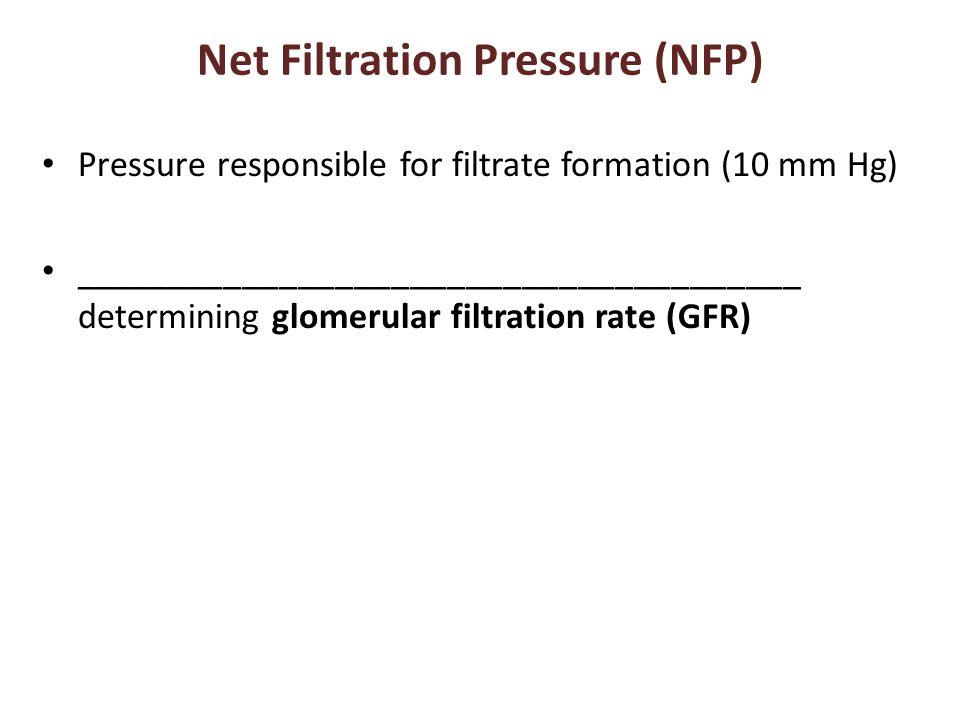 Net Filtration Pressure (NFP) Pressure responsible for filtrate formation (10 mm Hg) _______________________________________ determining glomerular filtration rate (GFR)