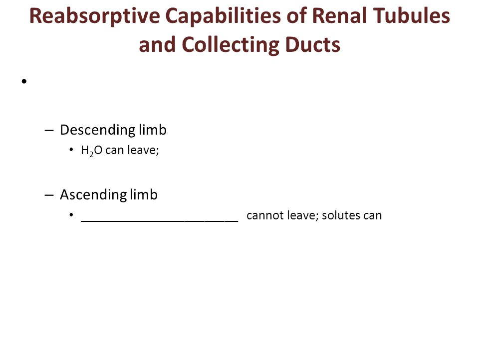 Reabsorptive Capabilities of Renal Tubules and Collecting Ducts – Descending limb H 2 O can leave; – Ascending limb ________________________ cannot le