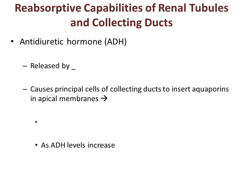 Reabsorptive Capabilities of Renal Tubules and Collecting Ducts Antidiuretic hormone (ADH) – Released by _ – Causes principal cells of collecting ducts to insert aquaporins in apical membranes  As ADH levels increase