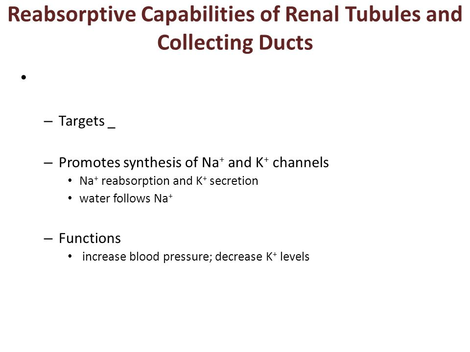 Reabsorptive Capabilities of Renal Tubules and Collecting Ducts – Targets _ – Promotes synthesis of Na + and K + channels Na + reabsorption and K + secretion water follows Na + – Functions increase blood pressure; decrease K + levels