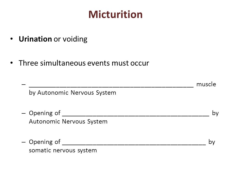 Micturition Urination or voiding Three simultaneous events must occur – _______________________________________________ muscle by Autonomic Nervous Sy