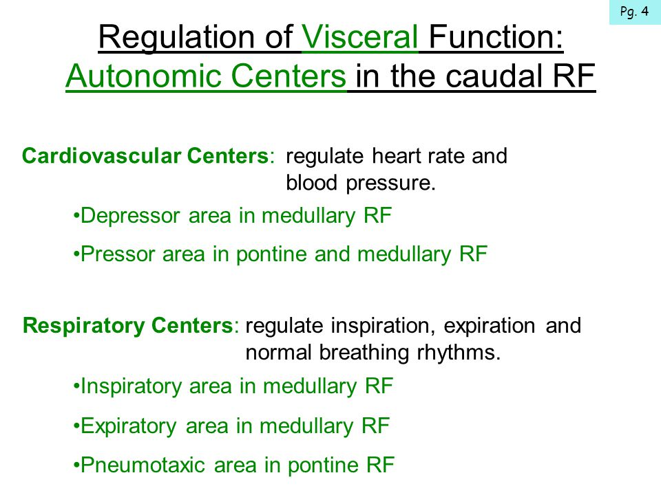 Regulation of Visceral Function: Autonomic Centers in the caudal RF Cardiovascular Centers: regulate heart rate and blood pressure.