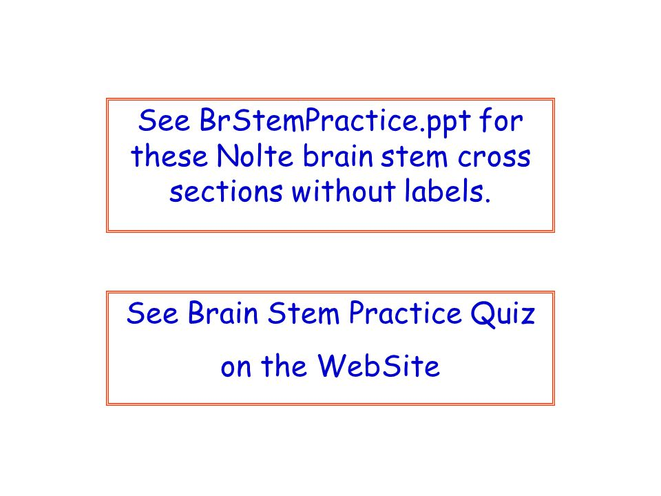 See Brain Stem Practice Quiz on the WebSite See BrStemPractice.ppt for these Nolte brain stem cross sections without labels.
