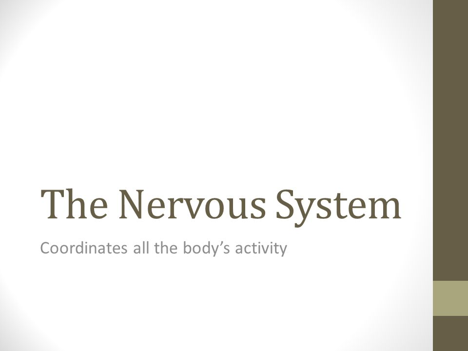 The Nervous System Coordinates all the body's activity
