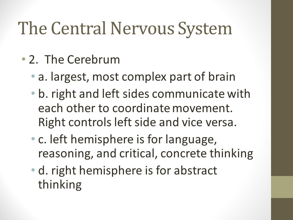 The Central Nervous System 2. The Cerebrum a. largest, most complex part of brain b. right and left sides communicate with each other to coordinate mo