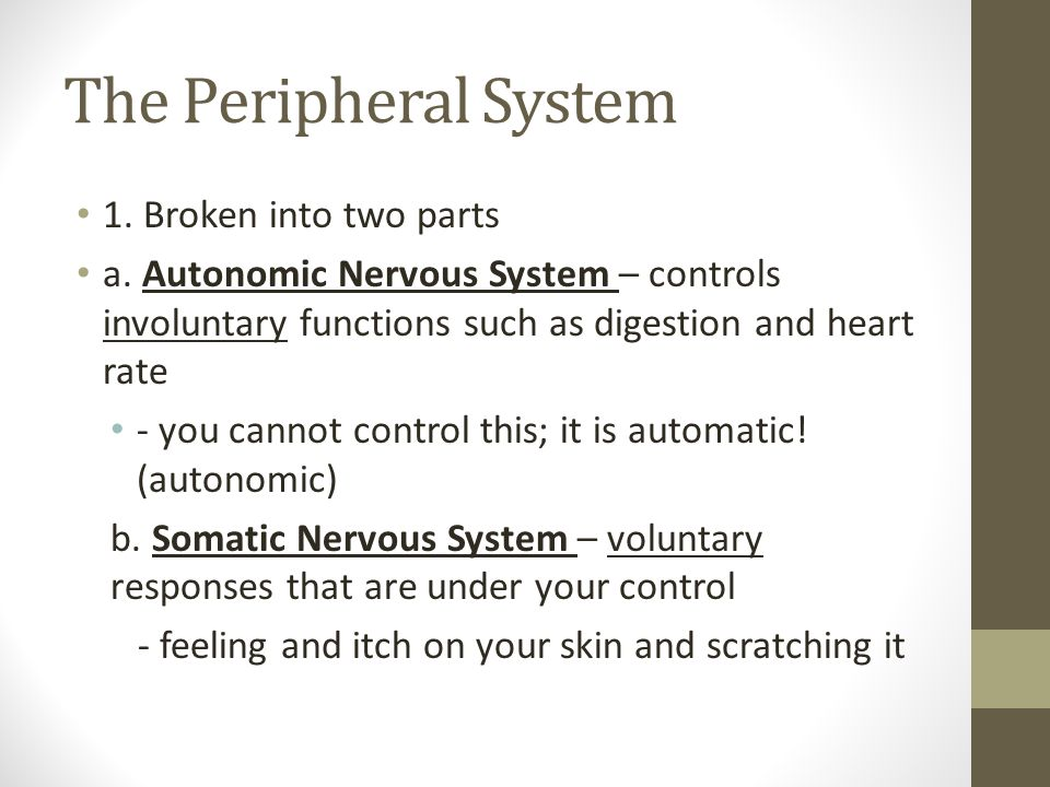 The Peripheral System 1. Broken into two parts a. Autonomic Nervous System – controls involuntary functions such as digestion and heart rate - you can