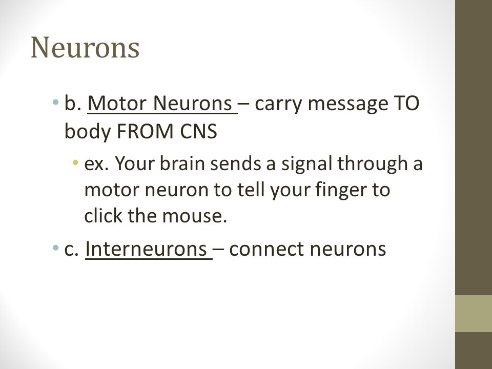 Neurons b. Motor Neurons – carry message TO body FROM CNS ex. Your brain sends a signal through a motor neuron to tell your finger to click the mouse.