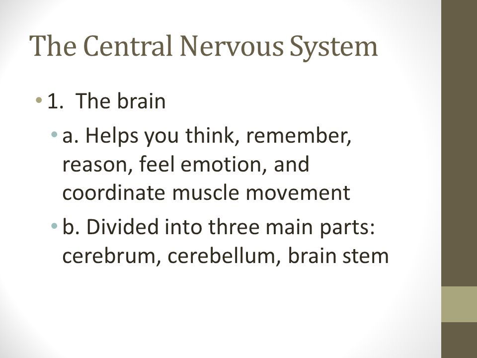The Central Nervous System 1. The brain a. Helps you think, remember, reason, feel emotion, and coordinate muscle movement b. Divided into three main