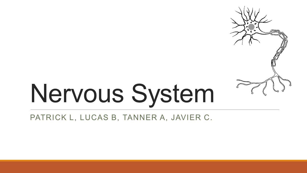 Nervous System PATRICK L, LUCAS B, TANNER A, JAVIER C.