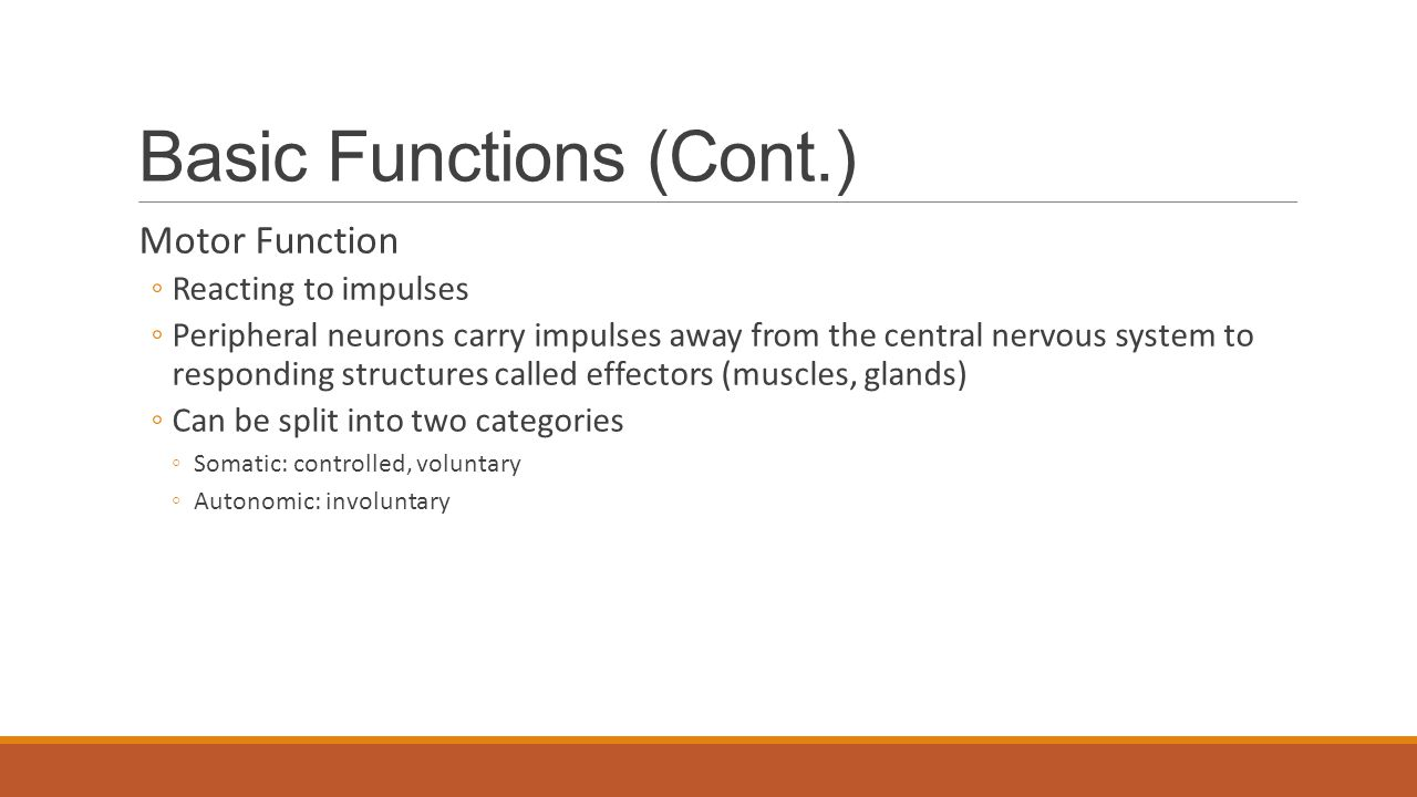 Basic Functions (Cont.) Motor Function ◦Reacting to impulses ◦Peripheral neurons carry impulses away from the central nervous system to responding structures called effectors (muscles, glands) ◦Can be split into two categories ◦Somatic: controlled, voluntary ◦Autonomic: involuntary