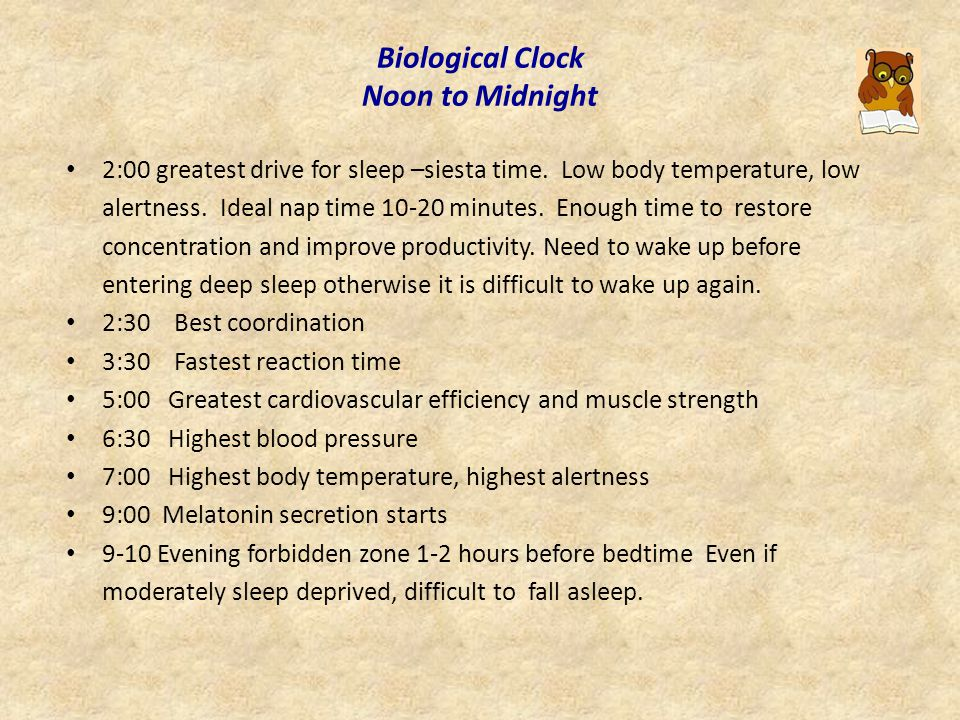 Biological clock Midnight to Noon 2:00 Deepest sleep, greatest drive to sleep.