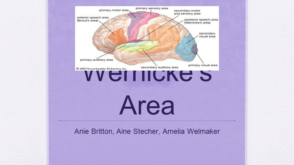 Wernicke's Area Anie Britton, Aine Stecher, Amelia Welmaker