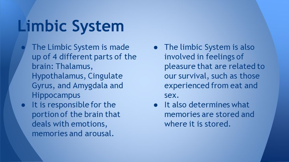 Limbic System ● The Limbic System is made up of 4 different parts of the brain: Thalamus, Hypothalamus, Cingulate Gyrus, and Amygdala and Hippocampus