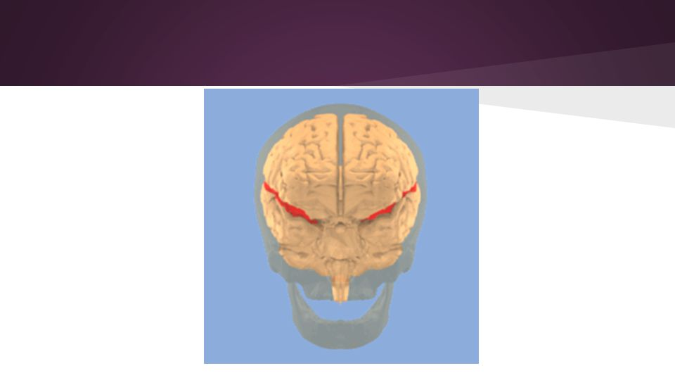 The Limbic system is responsible for controlling various functions in the body.