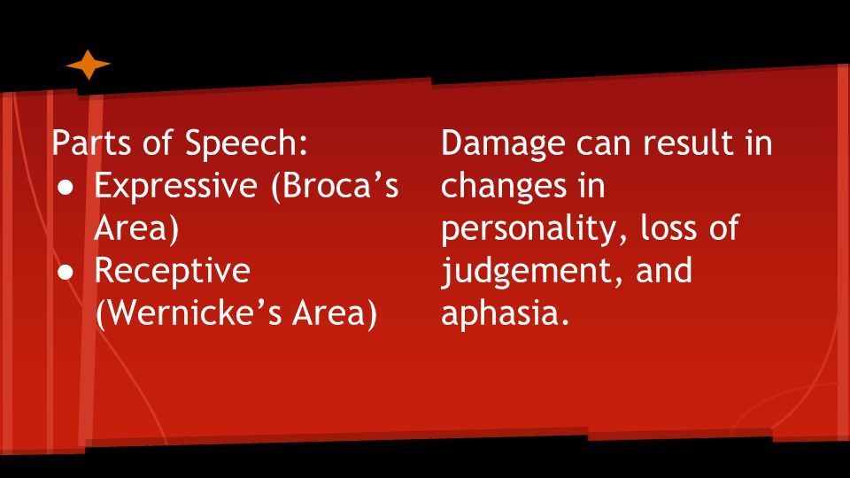 Parts of Speech: ● Expressive (Broca's Area) ● Receptive (Wernicke's Area) Damage can result in changes in personality, loss of judgement, and aphasia