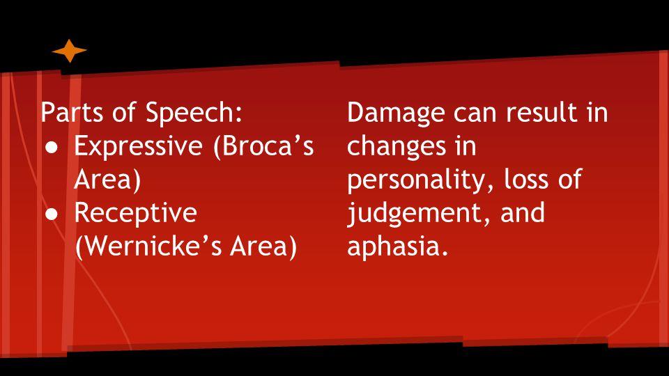 Somatic Nervous System Sam Baugh