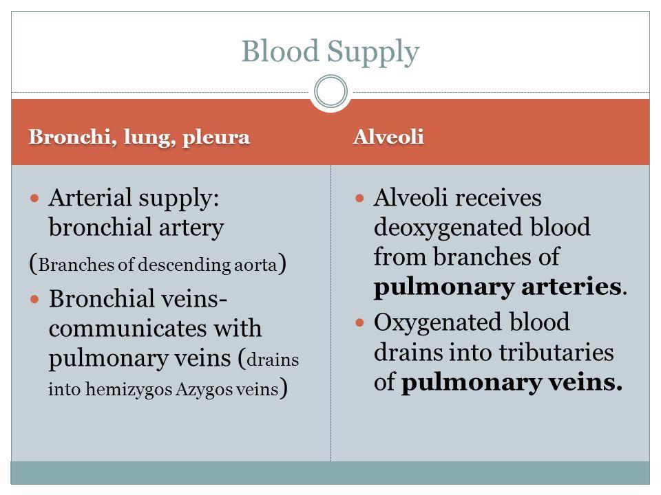Bronchi, lung, pleura Alveoli Arterial supply: bronchial artery ( Branches of descending aorta ) Bronchial veins- communicates with pulmonary veins (