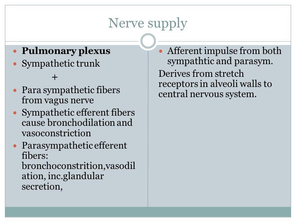 Nerve supply Pulmonary plexus Sympathetic trunk + Para sympathetic fibers from vagus nerve Sympathetic efferent fibers cause bronchodilation and vasoc