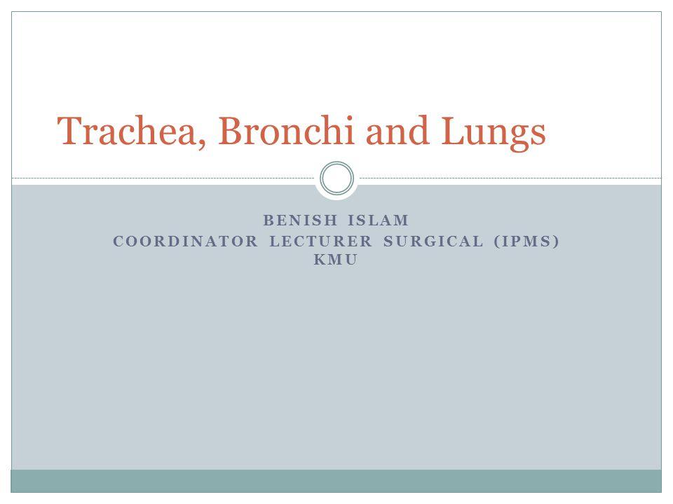 Trachea Mobile cartilaginous, membranous tube.Begins at neck, lower border of cricoid cartilage.