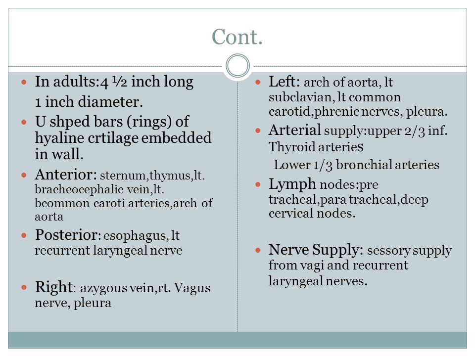 Bronchi Trachea bifurcates into rt.and lt. principal (primary) bronchi.