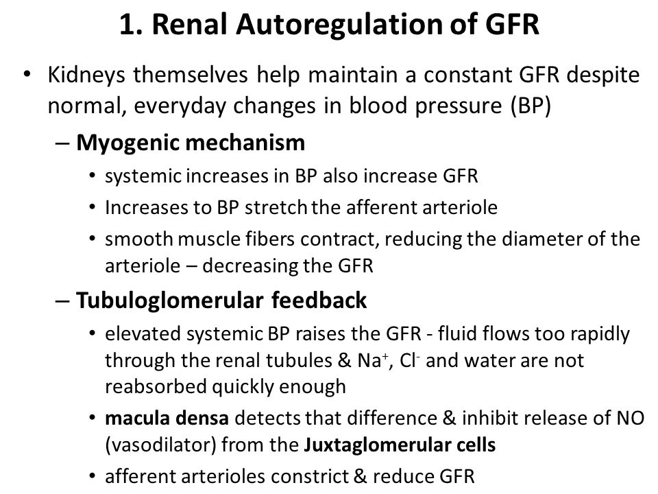 1. Renal Autoregulation of GFR Kidneys themselves help maintain a constant GFR despite normal, everyday changes in blood pressure (BP) – Myogenic mech