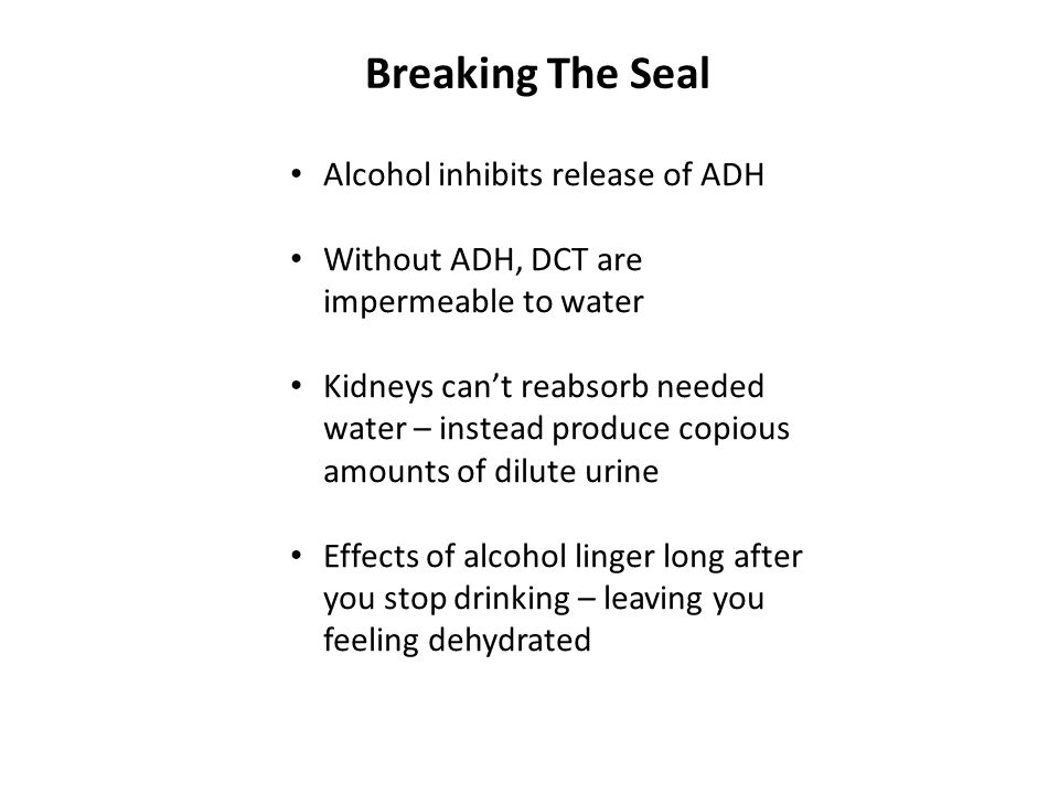 Breaking The Seal Alcohol inhibits release of ADH Without ADH, DCT are impermeable to water Kidneys can't reabsorb needed water – instead produce copi